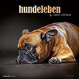 Hundeleben 2018 - Hunde - Bildkalender (33 x 33) - Tierkalender - mit Zitaten: by Sandra Schürmans