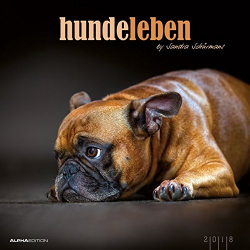 Hundeleben 2018 - Hunde - Bildkalender (33 x 33) - Tierkalender - mit Zitaten: by Sandra Schürmans (Beagle-kalender)