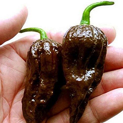 100 graines / paquet chocolat Graines Naga Jolokia Chilli, Ghost Pepper - Bhut Jolokia