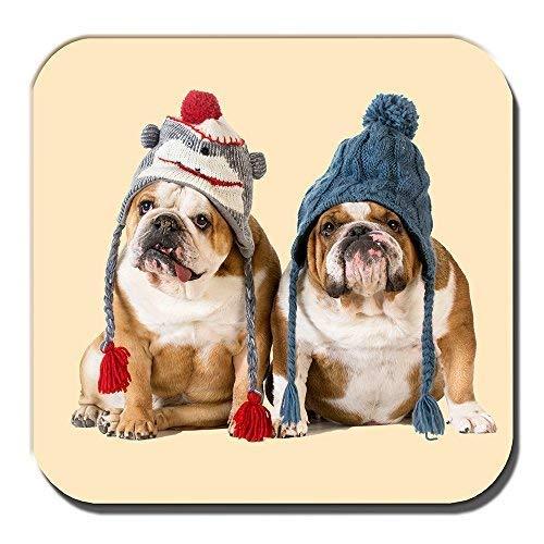 Englische Bulldoggen Untersetzer Junghunde Hellbraun Weiß Winter Strickmütze
