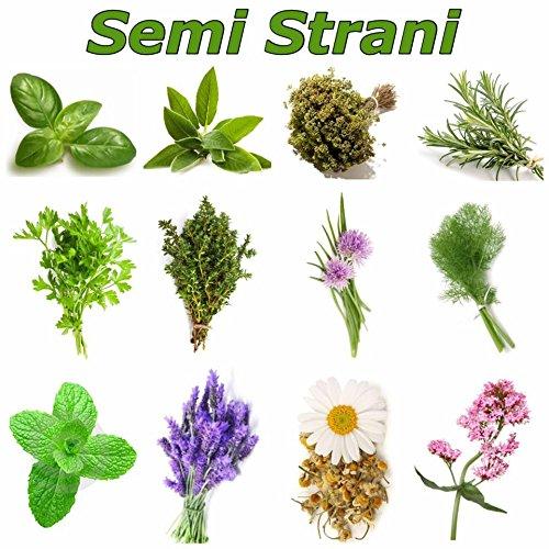 erbe-aromatiche-240-semi-in-12-varieta-collezione-1-piu-piccola-guida-alla-coltivazione-basilico-gen