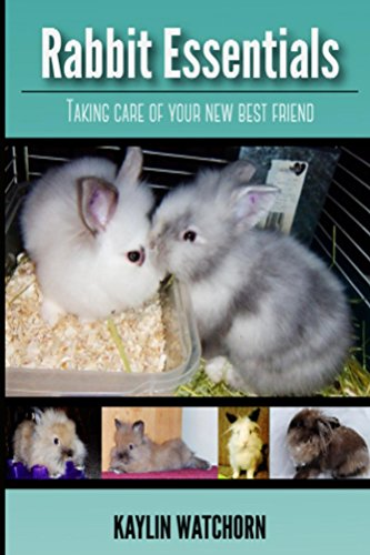 Rabbit Essentials: Taking care of your new