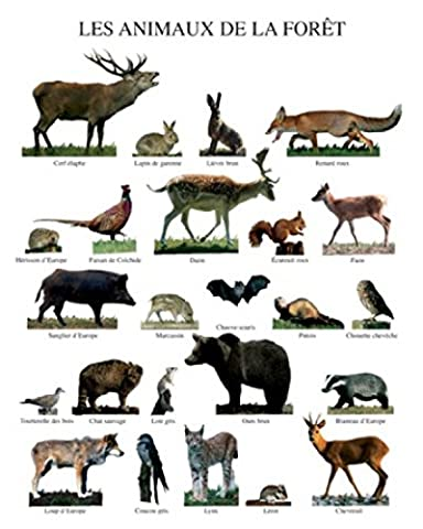 Poster De Foret - Posters: Animaux Poster Reproduction - Les Animaux