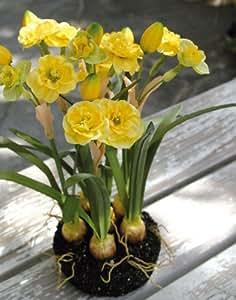 Narcisse artificiel en motte, jaune, 29 cm - Fleur artificielle / Jonquille artificielle - artplants