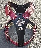 Große Zwei Ton Leder Hundegeschirr mit Staffordshire Bullterrier Kopf Motiv und Staffie Knoten BK/RD S