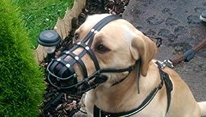Champion Muselière pour chien, léger en cuir
