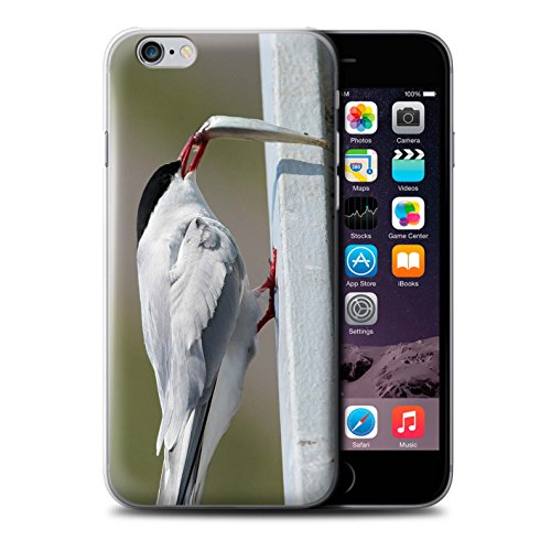 Stuff4 Hülle / Case für Apple iPhone 6S+/Plus / Weiß Arktis Hase Muster / Arktis Tiere Kollektion Arktis Vogel/Tern