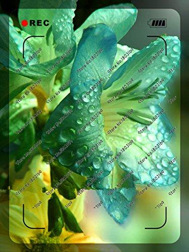 Galleria fotografica 200pcs / bag rari semi del giglio, non bulbi di giglio, è seme, semi di fiori di giglio bonsai, fragranza piacevole, impianti per la casa e il giardino