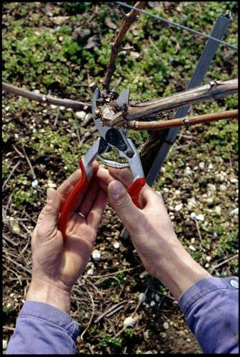 Felco Gartenschere Nr. 13 - für 1 oder 2 Hände -