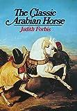 Classic Arabian Horse