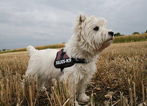 Trixie Julius/K9 Power Dog Harness, 8