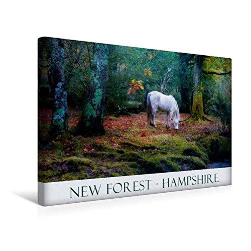 Premium Textil-Leinwand 45 cm x 30 cm quer, Ein Bild aus dem Kalender New Forest Hampshire | Wandbild, Bild auf Keilrahmen, Fertigbild auf echter Leinwand, Leinwanddruck (CALVENDO Natur) (New Hampshire-kalender)