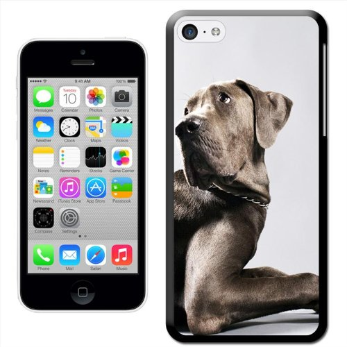 Fancy A Snuggle 'Weimaraner Dog Lying Down' Hard Case Clip On Back Cover für Apple iPhone 5 C Sat Down Looking Back