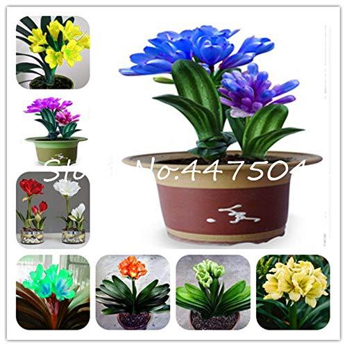Bloom Green Co. Heißer Verkauf-100 PC-Klivie Bonsai Bunter Herrliche seltenen Bush-Lilien-Blumen Bonsai Pflanze DIY Hausgarten mit hohem Zier: gemischt