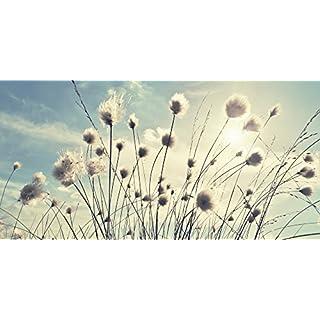 Artland Qualitätsbilder I Glasbilder Deko Glas Bilder 100 x 50 cm Botanik Gräser Foto Blau C6YJ Wollgras