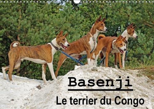 Basenji Le Terrier Du Congo 2018: Le Basenji Est Une Race De Chien Originaire De Centrafrique