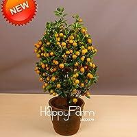 Más vendidos! 100pcs / Árboles bolsa Balcón Patio de tiesto frutales plantados Semillas Semillas kumquat semillas de naranja mandarina Citrus, # 8B9JQ4