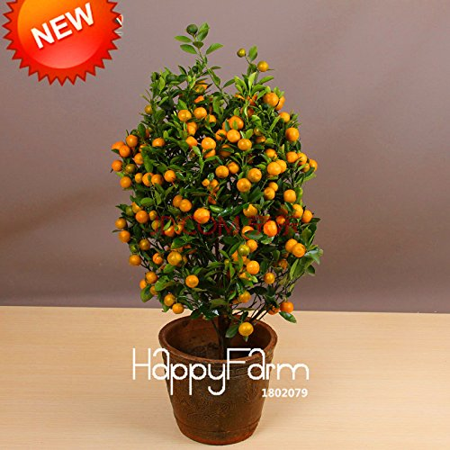 Best-Selling100pcs / sac Balcon Patio Les arbres fruitiers plantés en pot Graines Kumquat Graines orange Graines Mandarine Citrus, # 8B9JQ4
