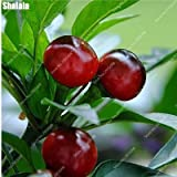 SwansGreen 2 : 200pcs/ bag Rainbow Cherry Pepper Seeds Rare Outdoor Spicy Bonsai Potted Chile Chili Vegetable Plant Easy to Grow 2