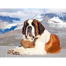 Posterlounge Cuadro de PVC 40 x 30 cm: Saint Bernard Rescue Dog de Editors Choice