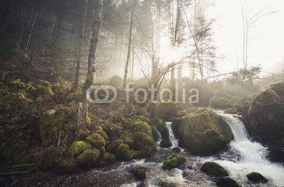 "Poster-Bild 60 x 40 cm: ""small stream in black forest, Germany"", Bild auf Poster"