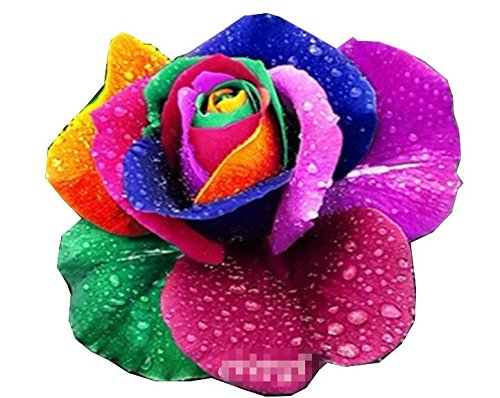 etsynet-100-rare-rainbow-rose-flower-seeds-your-lover-multi-color-plants-home-garden