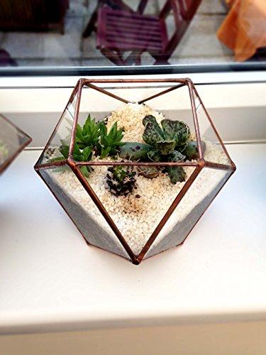 n-2-terrario-para-plantas-con-el-kit-completo-como-se-muestra-en-photo-special-one-apagado-oferta-in