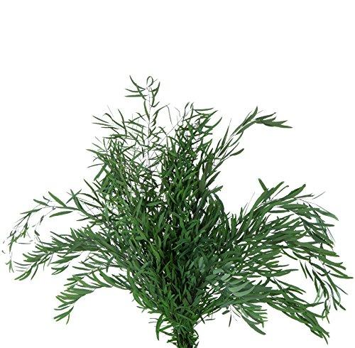 Verdissimo Eucalipto Preservado Ramas arreglos 60-80