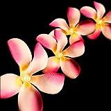 Blaze On Tropische Blüten Lichterkette Rosa Töne 20 GEFÜHRT