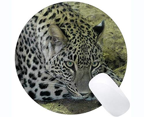Rutschfeste Gummi Gaming Runde Mausunterlage, Leopard Cat Family Leopard Runde (Leopard Kostüm Bilder)