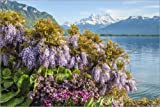 Posterlounge Canvas print 180 x 120 cm: Spring flowers on Lake Geneva by Olaf Protze - ready-to-hang wall picture, stretched on canvas frame, printed image on pure canvas fabric, canvas print