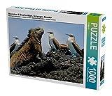 Meerechse & Blaufusstölpel, Galapagos, Ecuador 1000 Teile Puzzle quer (CALVENDO Natur)