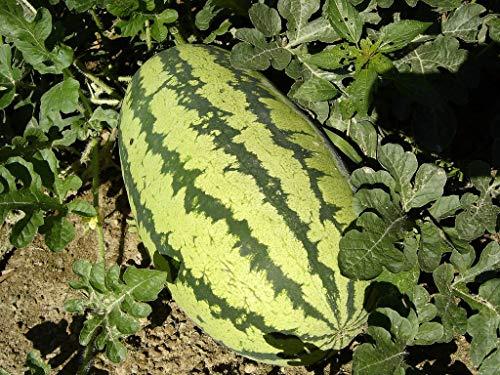 Farmerly 25+Jubilee Sachet de pastèque sans OGM Bio Goût de 30 kg