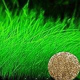 emvanv Fisch Tank, Samen Aquarium ansinnen Gras Landschaftsbau Dekoration Garten Vordergrund Pflanze Mini Leaf Gras