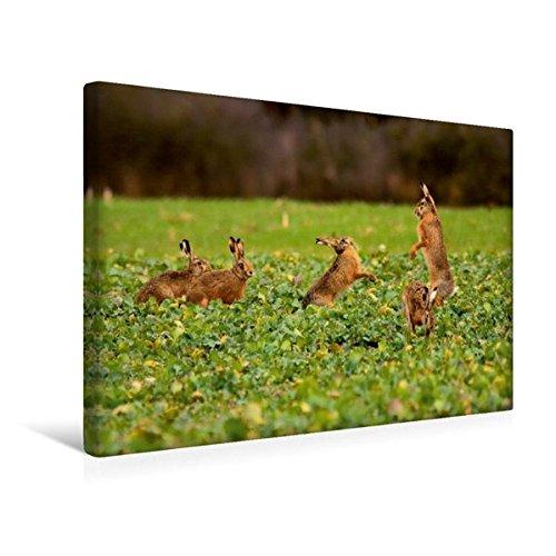 Premium Textil-Leinwand 45 cm x 30 cm quer, Ein Motiv aus dem Kalender Tiere in der Feldmark | Wandbild, Bild auf Keilrahmen, Fertigbild auf echter Leinwand, Leinwanddruck (CALVENDO Tiere)