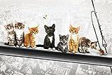 Katzen auf Stahlträger - Poster - New York Kittens + Ü-Poster