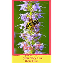 Bees!!! How they Live Their Lives: 88 pages large Images Photo books, photo books nature, photo books adults, photo books children, photo books kids (photo book nature 2) (English Edition)