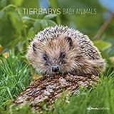 Tierbabys 2020 - Baby Animals - Wandkalender - Broschürenkalender (30 x 60 geöffnet) - Tierkalender - Wandplaner