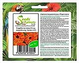 75 jardín de plantas de semillas de caléndula indio Príncipe Doppelblumig semilla nueva K155