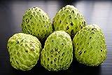 Portal Cool 5 semi dolci semi di Annona crema pasticcera zucchero di mele frutta Cherimoya diluito D114