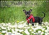Prager Rattler (Tischkalender 2018 DIN A5 quer): Kleiner Hund mit ganz viel Herz (Monatskalender, 14 Seiten ) (CALVENDO Tiere) [Apr 07, 2017] Julo-Seelenbider, k.A.