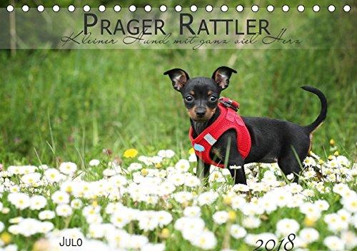 hkalender 2018 DIN A5 quer): Kleiner Hund mit ganz viel Herz (Monatskalender, 14 Seiten ) (CALVENDO Tiere) [Apr 07, 2017] Julo-Seelenbider, k.A. (Black Tan Chihuahua)