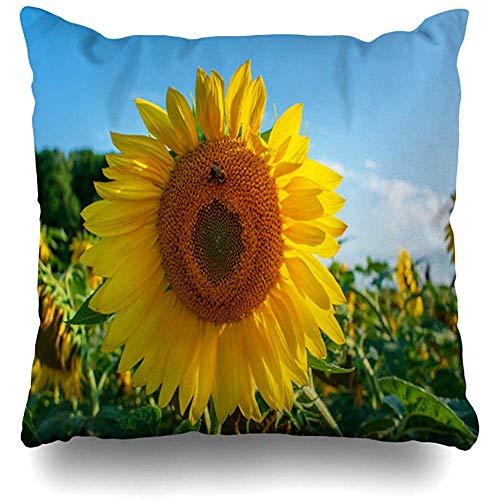 K.e.n Throw Pillow Cover Landwirtschaft Blue Sunflower Sun Natur Leaf Blossom Nahaufnahmefeld Floral Sky Kissenbezug -
