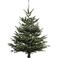 Dominik Blumen und Pflanzen, Weihnachtsbaum Nordmanntanne, ca. 185 - 210 cm hoch, geschlagen