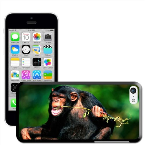 Fancy A Snuggle 'Schimpanse' Hard Case Clip On Back Cover für Apple iPhone 5 C Chimpanzee Eating