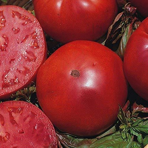 Seekay Tomate Super Marmande VR - Rindersteak Typ Ca. 200 Samen Gemüse