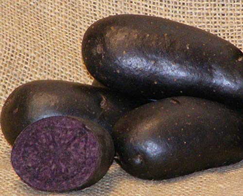 IDEA HIGH Sycamore Trading Violetta-Samkartoffeln, 10 Knollen A Early Main Crop Sorte Violetta Kartoffeln haben Glatte, dunkelblaue oder Violette Haut und dramatische dunkelblaue Flesh