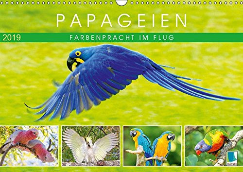 Papageien: Farbenpracht im Flug (Wandkalender 2019 DIN A3 quer): Papageien: Bunte Exoten im Porträt (Monatskalender, 14 Seiten ) (CALVENDO Tiere)