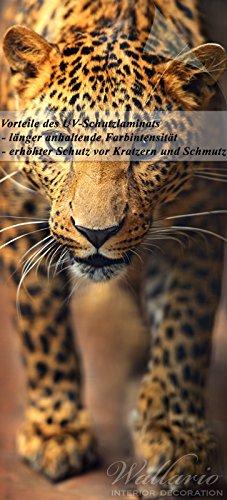 Wallario Selbstklebende Türtapete mit Schutzlaminat, Motiv: Leopard in Nahaufnahme bein Laufen - Größe: 93 x 205 cm in Premium-Qualität: Abwischbar, brillante Farben, rückstandsfrei zu entfernen (Bein Leopard)