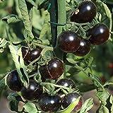 10 Samen Helsing Junctions Blue Tomate – sehr dunkle Früchte